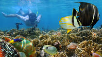 Deluxe Day Trip to Taboga Island with Snorkeling from Panama City, Panama City, Day Trips