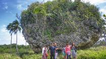 3-Hour Tongatapu West Coast Scenic Tour, Tonga, Cultural Tours