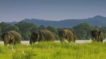 Full Day Jungle Safari Tours in Chitwan National Park Nepal, Kathmandu, Day Trips