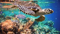 Snorkeling with Turtles in the Bay of Akumal from Cancun, Cancun, Snorkeling