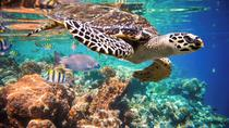 Snorkeling with Turtles in the Bay of Akumal, Cancun, Snorkeling