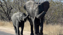 Kruger National Park - 1 Day (Open Vehicle), Maputo, Safaris