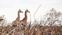 Kruger National Park - 2 Days (Open Vehicle), Maputo, Multi-day Tours