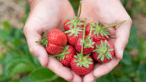 6-Hour Private Tour: Strawberry Picking and Water Town Visiting from Shanghai , Shanghai, Eco Tours