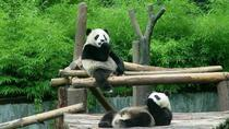 Private Transfer between Shanghai Zoo and City Hotels, Shanghai, null