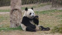 Privater Transfer zwischen dem Shanghai Wild Animal Park und dem City Hotel, Shanghai, Private Transfers
