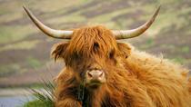Loch Lomond and Trossachs National Park Tour, Scotland, Day Trips