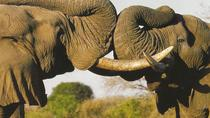 Wildlife Safari in the Garden Route, Cape Town, Multi-day Tours