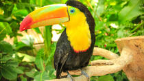 Diamante Eco Adventure Park: Animal Sanctuary Discovery Pass, Liberia, null