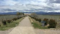 Private Lujan Wine Tour with Gourmet Wine-Paired Lunch from Mendoza, メンドーサ