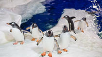 24hr Hop-On Hop-Off inc Kelly Tarlton's SeaLife Aquarium & Sky Tower, Auckland, Attraction Tickets