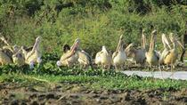 Village Birdwatching Oxcart Riding, Siem Reap, 4WD, ATV & Off-Road Tours