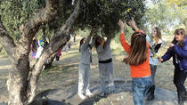 OLIVES AND VIRGIN OLIVE OIL DAY IN KALAMATA WITH LUNCH IN OUR FARM, Kalamata, Cultural Tours