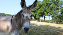 Private Day Tour: Land of Golden Stones with Donkey Companion, Lyon
