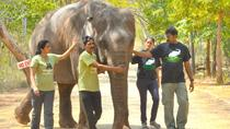 Visit Asia Largest Bear Rescue Center and Elephant Rescue Center with Akbars tomb, Agra
