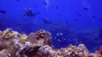 Cozumel Xpress 2-Tank Dive from Playa del Carmen, Playa del Carmen, Scuba Diving