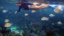 Snorkeling Tour in Playa del Carmen, Playa del Carmen, Private Sightseeing Tours