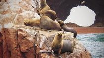 Ballestas Islands and Paracas National Park Day Trip, パラカス