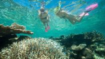 Great Barrier Reef, sejltur med dykning og snorkling fra Cairns, Cairns & Tropical North