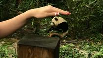 Chengdu Private Day of City Highlights and Panda Experience, Chengdu, Private Sightseeing Tours