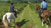 Horseback Riding in Puglia Near Bari, Puglia, Horseback Riding