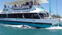 Mandurah Dolphin and Scenic Canal Cruise, Western Australia, Dolphin & Whale Watching
