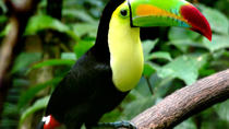 Belize Zoo Tour from San Ignacio, San Ignacio, Air Tours