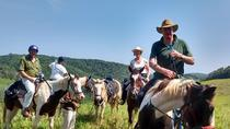 Horseback Riding on an Equestrian Farm in San Ignacio, San Ignacio, Horseback Riding
