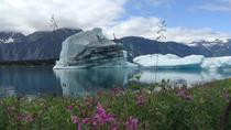 30 Minute Glacier Expedition Flight Tour, Seward, Dolphin & Whale Watching