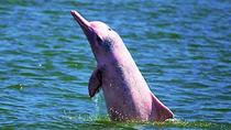 Pink Dolphin Encounter & Snorkelling Tour, Surat Thani, Day Cruises
