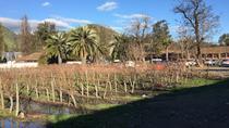 Half-Day Small-Group Santa Rita Vineyard Tour, Santiago, Wine Tasting & Winery Tours