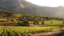 Small-Group Maipo Vineyards Full-Day Experience with Optional Lunch, Santiago, Wine Tasting & ...