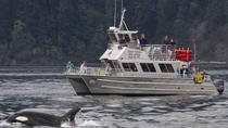 Anacortes Whale Watching, Seattle