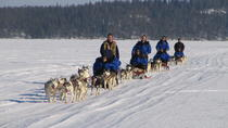 Lapland Thrill of Speed: Husky Safari from Rovaniemi, Rovaniemi, Ski & Snow