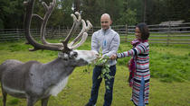 Visit to reindeer and husky farm and visit Santa Claus Village in Rovaniemi, Rovaniemi, Ski & Snow
