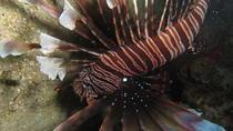 Scuba Dives, La Romana, Scuba Diving