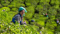 8 Days Kerala Private Tour with Munnar, Backwaters, Beaches & Houseboat, Kochi, Private Sightseeing...