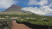Full-Day Pico Island Tour from Horta, Azores, Day Trips