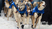 2018 Iditarod Race Start, Anchorage, Cultural Tours