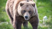 Alaska Wildlife Tour, Anchorage, Day Trips