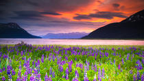 Turnagain Arm Tour, Anchorage, Half-day Tours
