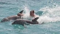 Ocho Rios Combo Tour: Dolphin Cove and Negril Sunset Cruise, Ocho Rios, Swim with Dolphins