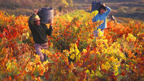 Autumn in La Rioja Wineries Tour from San Sebastian with Lunch, San Sebastian, Wine Tasting & ...