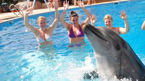 30 Minute Swim with Dolphins in Sharm el Sheikh, Sharm el Sheikh, Swim with Dolphins