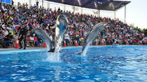 Dolphin Show in Sharm el Sheikh, Sharm el Sheikh, Theater, Shows & Musicals