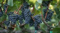 Santa Rosa Winery Tour , Santa Rosa, Wine Tasting & Winery Tours