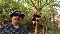 Chengdu Panda Base Half Day Tour, Chengdu, Cultural Tours