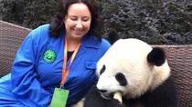 Panda Holding Tour at Dujiangyan Panda Base, Chengdu, Private Sightseeing Tours