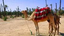 Half-Day Camel Ride in Palmaerie from Marrakech, Marrakech, Half-day Tours
