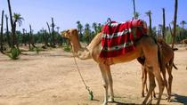 Two Hour Camel Ride in Palmaerie from Marrakech, Marrakech, Half-day Tours